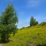 Duisburg - »Landschaftspark Nord« - ehemaliges August-Thyssen-Hüttenwerk (128) thumbnail