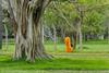 J1. Moine - Anurâdhapura (Darth Jipsu) Tags: religion colorfull anuradhapura anurâdhapura buddhism srilanka monk robe orange bhikshu