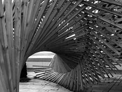 Fibonacchian Wood-Monster (ErdenizS) Tags: olympus pen ep3 bw