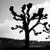 Heads Fruits Tree (Armin Fuchs) Tags: arminfuchs würzburg tree sky silhouette rivermain main mainkai altemainbrücke winter niftyfifty plasticfantastic