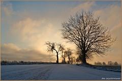 Winterstraße (der bischheimer) Tags: sonnenaufgang sunrise schnee baum tree silhouette sony derbischheimer