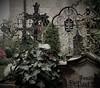 Petersfriedhof (SM Tham) Tags: europe austria salzburg petersfriedhof christian cemetery graveyard tombs graves cross tombstone plants garden outdoors wroughtiron jesuschrist