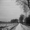 Snow on the way (Rosenthal Photography) Tags: ff120 rodinal15020°c21min landschaft 6x6 schwarzweiss anderlingen asa400 feld winter 20180201 mittelformat rolleirpx400 fahrradweg städte feldscheune bw februar bnw zeissikonnettar51816 analog dörfer siedlungen landscape snow february mood nature mediumformat blackandwhite path track road pathway zeiss ikon nettar 51816 75mm f45 rollei rpx rpx400 rodinal 150 epson v800