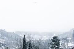 Let it snow (pierfrancescacasadio) Tags: 852 lifeisarainbow febbraio2018 neve 22022018840a5178 50mm snow letitsnow winter wintertime wintervibes onpurewhite smileonsaturday grigio gris grey tree february