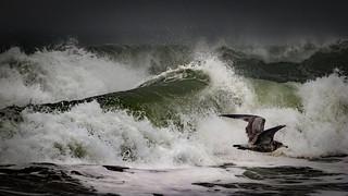 Agitated Sea with Gull