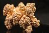 Copper (Ivan_p_) Tags: chemistry copper science macro metal dendrites nodules electrochemistry plating