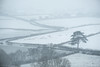 Blizzard Country (Sarah_Brooks) Tags: snow snowing blizzard winter stormemma storm wind drift landscape countryside countrylane tree somerset westcountry beastfromtheeast