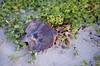 DSC_8281 (Tripping On Change) Tags: southcarolina harborisland island beaufort cemetery ocean beach shrimpshack alligator mussels nature