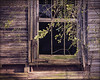 Open and Airy (Bamagirl7) Tags: 118picturesin2018 alabama coosacounty abandonedhouse window rottedwindow leaves rottinghouse topazsoftware dappledlight moss