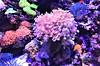"It's always ""Spring""  Underwater ... (dodagp) Tags: singapore sentosaisland seaaquarium oceanariums blueplanetsmarinewonders marinelifepark theuniverseoflifeintheocean colourfulcoralreefs seaanemones anemonetentacles openoceantanks resortsworldsentosa marinerealms 1march2018 meteorologicalsping springunderwater realmsoflife"