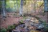 Sigma Dp2 Merrill (t h o m a s h e k) Tags: sigmamerrill sigmadp sigmadp2 sigmadp2merrill foveon otoño paisaje landscape senderismo trekking naturaleza