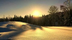 Sunset reflection on snow. (evakongshavn) Tags: sunset snow reflections winter winterwonderland winterwald winterlandscape reflection sunshine letthesunshinein neige hivernal hiver paysage landscape landschaft natur nature new light white yellow sundaylights