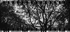 2017-08 - 097SR_11 (sarajoelsson) Tags: sprocketrocket blackandwhite bw panorama panoramic sprocketholes digitizedwithdslr toycamera ilford 135 35mm hp5 monochrome plasticlens filmphotography filmisnotdead believeinfilm filmshooter film wideangle lomography lomo xtol teamframkallning bnw svartvitt blackwhite sweden 2017 summer summertime august vacation skåne österlen sverige