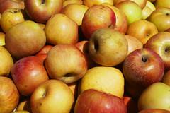 A Bushel of Apples (Grazerin/Dorli Burge) Tags: apples fruit food edible farmersmarket losangeles texture color elements