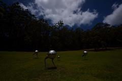 Long Point Vineyard 02 (Paul Hollins) Tags: longpointvineyard sculptures nikond750