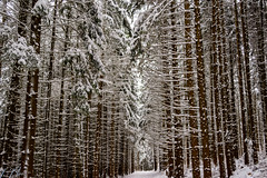 Trails near Hohenzollern Castle (Brian Out and About) Tags: nikon d5200 europe germany hohenzollern forest trees trails snow winter cold deceiving