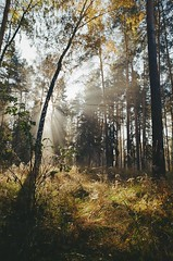 000116400014 (MatveyKarmakov) Tags: nikon nikonf3 kodak 35mmfilm morning film analog filmisnotdead filmphotography filmphoto filmcamera filmlandscape filmcommunity onfilm ishootfilm wood forest folk livefolk