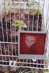 Andi & the plant cage (Andi [アンデイ]) Tags: polaroid analog analoug analogphotography expiredpolaroid nature portrait backyard forest woods trees field farmer plants naturephotography experimental three layers gardening