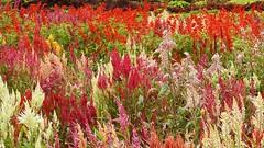 Colorful plants (Birdwatcher18) Tags: colourful plants vivid garden