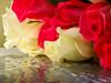 Voici... (BLEUnord) Tags: fleurs flowers roses reflections réflexions fleurscoupées coupées cut bunch