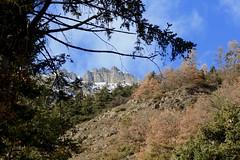 un jour de Janvier (bulbocode909) Tags: valais suisse montagnes nature hiver forêts arbres chavalard vert bleu orange nuages paysages