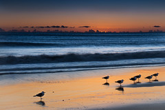 Malibu birds (donminer) Tags: sunset sky birds waves water malibu california travel art longexposure reflections sand sea pacificocean storm clouds