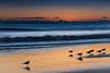 Malibu birds (donminer) Tags: sunset sky birds waves water malibu california travel art longexposure reflections sand sea pacificocean storm clouds