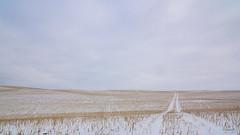 The straight & narrow (Len Langevin) Tags: alberta canada prairie stubble winter landscape minimal minimalism nikon d7100 tokina 1224