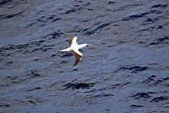 J78A0204 (M0JRA) Tags: birds flight flying walks gardens parks fields trees lakes ponds ducks swans
