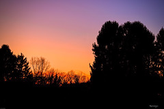 Winter Sunset Belgium (kiareimages1) Tags: charleroi wallonie belgique trees sky sunsets landscapes imagery images colors nalinnes