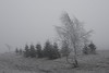 sense of snow III (Mindaugas Buivydas) Tags: lietuva lithuania winter color december tree trees birch fir fog mist sadnature softgreen mood moody mindaugasbuivydas