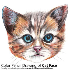 Cat Face with Color Pencils [Time Lapse] (drawingtutorials101.com) Tags: cat face catface cats head animal animals sketch sketches sketching pencil color colors coloring draw drawing drawings how timelapse video