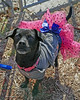 Mia 2  (11) (AbbyB.) Tags: dog canine shelter pet rescue adopt dachshund mtpleasantanimalshelter easthanovernj newjersey shelterpet petphotography
