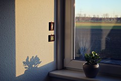 feels like spring (Ralaphotography) Tags: winter season january light sunset home indoor shadow interior field nature window pane plants silhouette