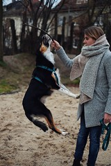 Play with the dog... (hobbit68) Tags: hund dog tochter daughter sand animal tier