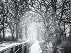 Enchanting Winter Path (adlai7) Tags: woods forest tree trees trail road fog foggy winter snow mist madison wisconsin loweryahararivertrail capitalspringsstaterecreationarea olympus landscape omd em5markii panasoniclumixg20mmf17 micro43 microfourthirds bw blackwhite