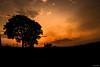 Caquetá de paz (Esteban Duque) Tags: airelibre landscape silueta sunset sun sombras siluetas sky shadows sol siluets suns canon cámara camera colombia campo