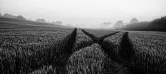 the spot (Simon[L]) Tags: xmarksthespot field crossingtracks mist bw minoltamc28mmf25 gloomyweather dark bleak lines