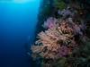 23022018-_1240243 (chevalbenjamin) Tags: philippines visayas bohol underwaterphotography underwater scubadiving dive plongéesousmarine corals plongée seaocean nature