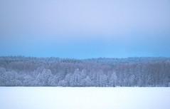 February Mood (bjorbrei) Tags: winter snow frost ice lake shore forest trees spruces hills hillside sky maridalen maridalsvannet lakemaridal oslo norway