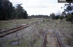 3232 Koojedda 18 July 1982 (RailWA) Tags: railwa phil melling westrail 1982 koojedda