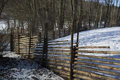 Fence (Rudi Pauwels) Tags: fotosondag staket fs180235 goteborg gothenburg slottsskogen vinter winter snow trees linnestaden cold sunny sverige sweden schweden sigma 1850mm sigma1850mm nikon d7100 nikond7100