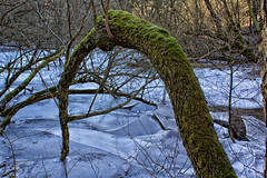Eisbrecher (Zoom58.9) Tags: baum moos sträucher eis winter wald landschaft natur deutschland harz tree moss shrubbery ice forest landscape nature germany canon eos 50d