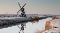De kemphaan de Waal (Jos van der Wijst) Tags: 2018 texel weidemolen dekemphaan dewaal