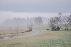 DSC_7966 (Tatiana Gourbiere) Tags: fog brouillard brume paysage landscape nature france janvier