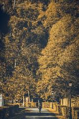 Inside Nature (_Hadock_) Tags: notes cascada nature naturaleza fall long exposure fallas me myself i selfie tripod autumn otoño orange trees creative commons fullhd fondo de pantalla screensaver desktop nikon d750 tamron 2470 navarra elizondo rock water tree model girl standing sitting woods forest wood