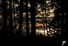 If you go out in the woods (Keylight1) Tags: bcxt20 d7000 keylight mjk whiterock ocean