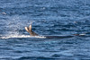 mother and calf (EdgarJi) Tags: whale calf maui pacificwhalefoundation sunrisewhalewatching