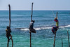 the catch (tattie62) Tags: srilanka fishing fisherman stiltfishing stiltfisherman tradition traditional angling travel tourism men fishermen hats sea ocean indianocean work