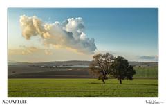 Aquarelle (Raul Kraier) Tags: cloud green valley wheat plantation canon aquarelle hills evening light oak